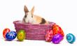 Easter egg and bunny in basket