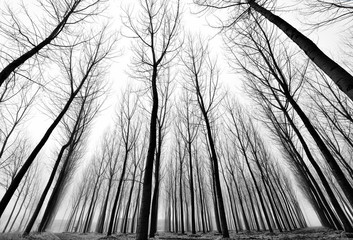 Bosco oscuro