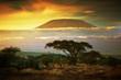 Leinwandbild Motiv Mount Kilimanjaro. Savanna in Amboseli, Kenya