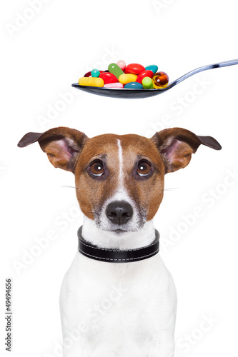 dog pills diet