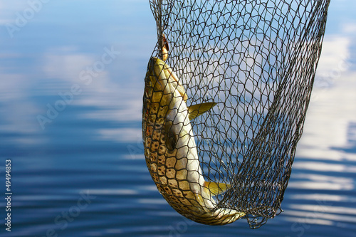 Plexiglas Vissen trout catch