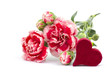 Carnations and heart on white background