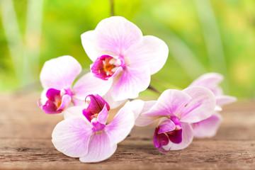 Orchidee mit natürlichen Hintergrund