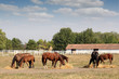 horses in corral farm scene