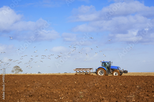 Gulls following Tractor Ploughing Field