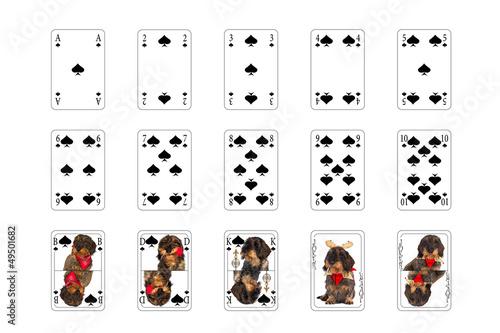 Poster Spielkarten - Pick mit Hundebilder