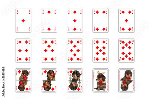 Poster Spielkarten - Karo mit Hundebilder