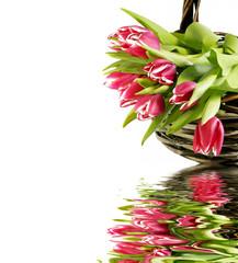 Tulpen im Korb mit Spiegelung