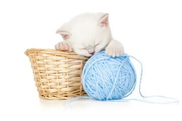 sleeping kitten in basket