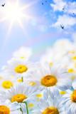 Fototapeta niebo - wiosna - Kwiat
