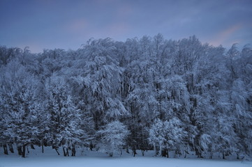 Winter landscape with trees full of frost