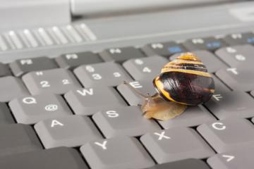 Lahmes Internet - Schnecke auf einer Tastatur