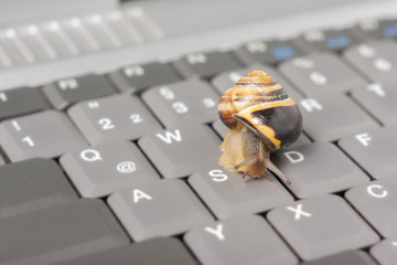 Datenstau - Schnecke auf einer Tastatur