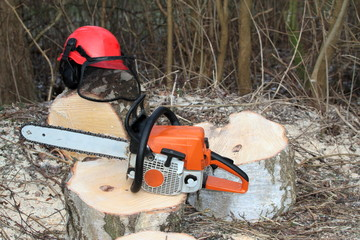 Chainsaw safety equipment and cutting  tree in forest
