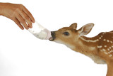 orphaned fawn poster