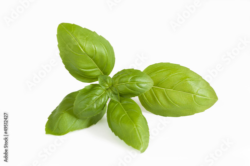 Fresh basil sprig on white