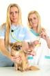 veterinary examining the dog