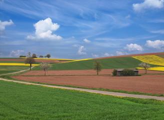 Feldflur im Frühjahr