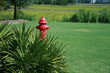 Red fire hydrant behind the bushes.