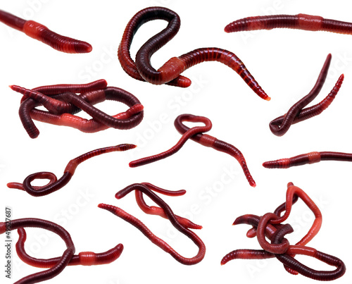 set of earthworms isolated on white