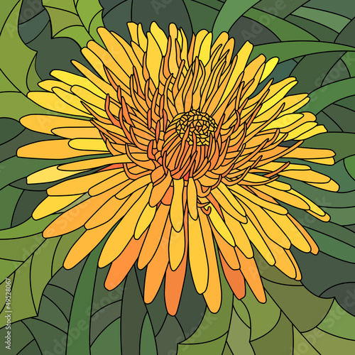 Vector illustration of flowers orange dandelion.