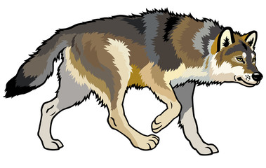 wolf side view