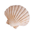 ocean shell isolated on white background