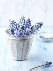 Bunch of Grape Hyacinths in a Vase
