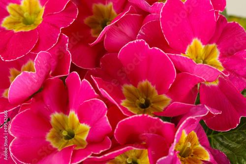 Fototapeten,rosa,schließen,auf,hintergrund