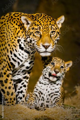 Jaguar Cubs