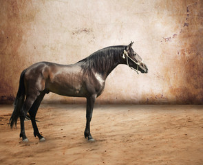 Andalusian breed stallion at abstract background