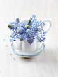 Bunch of  Grape Hyacinths in a Cup
