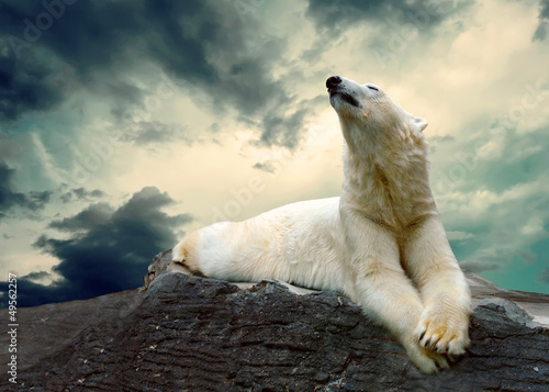 Fototapeten Eisbar White Polar Bear Hunter on the Ice in water drops.