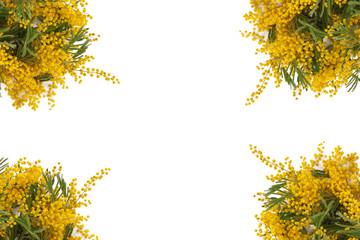 Mimose ad angolo