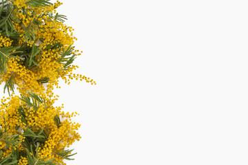 mazzi di mimose