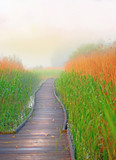 Boardwalk path in swamp