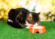 cat eating on grass on bright background