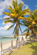 plage sous les cocotiers, île Maurice