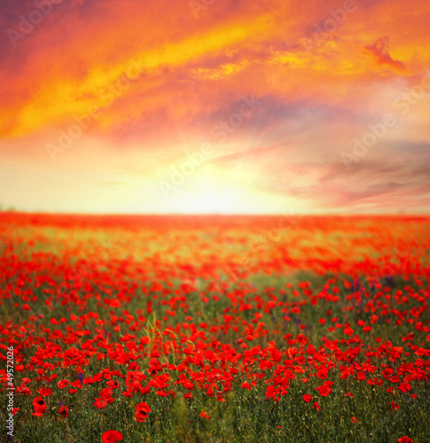 Fridge magnet Poppy field