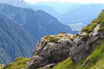 Marmots and Fassa Valley, Trentino, Italy