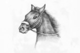 Pencil Drawing of a horse - 49574621