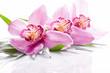 Fototapeten,cymbidium,orchid,blume,blume