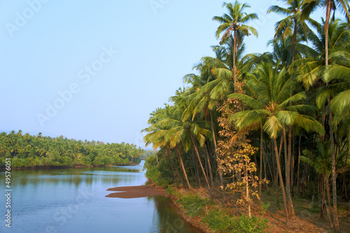 Scenic view of wild tropical jungle