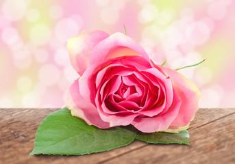 Rose Bokeh und Holzuntergrund