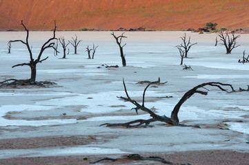 Dead trees in the Dead Valley in Namibia