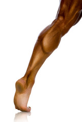 study, musculature of male athlete's leg