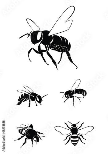 bee Collection Set