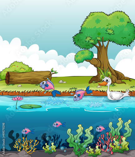 Tuinposter Rivier, meer Sea creatures with a duck