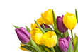 Tulpenstrauss lila gelb