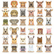 Big vector cartoon animal set